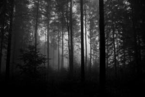 woodworld